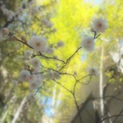 石田晃久 公式ブログ/もうすぐ春ですね 画像1