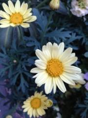 石田晃久 公式ブログ/花の季節 画像3