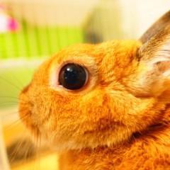 石田晃久 公式ブログ/おはよウサギ 画像2