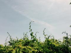 MIKA 公式ブログ/ハート 画像3