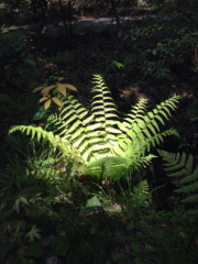 MIKA 公式ブログ/植物シリーズ 画像3