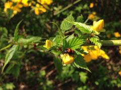 MIKA 公式ブログ/植物シリーズ 画像1