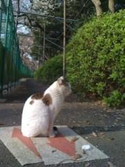 遠藤七重 公式ブログ/*お散歩*さくら 画像2