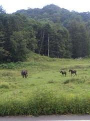 荒木巴 公式ブログ/大自然 画像2