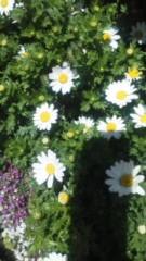 川連廣明 公式ブログ/春、 画像1