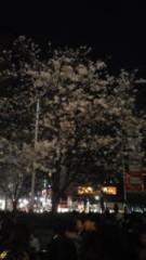 川連廣明 公式ブログ/桜 画像1