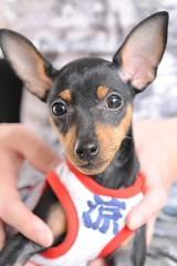 飯沼ももこ 公式ブログ/愛犬 画像1