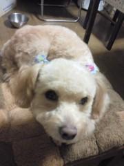 飯沼ももこ 公式ブログ/愛犬 画像2