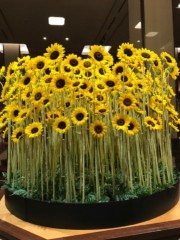 村松えり 公式ブログ/向日葵の花 画像2
