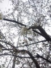 佐々木晃司(The Thank you & Sorry) 公式ブログ/春はまだか? 画像1