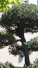 植木紀世彦 公式ブログ/兄の威厳 画像1