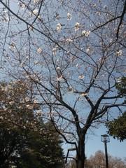 植木紀世彦 公式ブログ/サクラサク 画像1