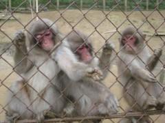 斉藤カオリ 公式ブログ/愛宕山の猿&ランチ 画像1