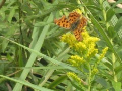 斉藤カオリ 公式ブログ/蝶の蜜吸い 画像1