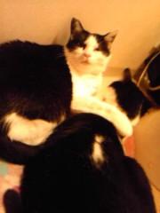 一色海鈴 公式ブログ/愛猫さーん(・A・*) 画像1
