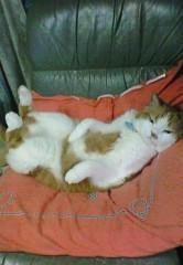 天野慶子 公式ブログ/昼寝するオヤジ?(爆) 画像1