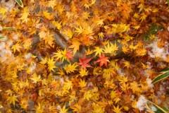 中野裕之 プライベート画像 鎌倉の紅葉