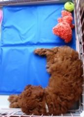 ならゆりあ 公式ブログ/お昼寝Cookie♪ 画像1