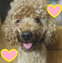 ならゆりあ 公式ブログ/耳かっき〜(U´Д`)ワンワン 画像1
