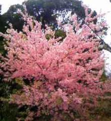 ならゆりあ 公式ブログ/春〜(´∀`*) 画像1