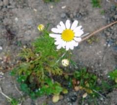 ならゆりあ 公式ブログ/お庭♪ 画像2