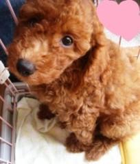 ならゆりあ 公式ブログ/別犬!?U・ω・)ノワフン 画像1