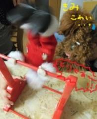 ならゆりあ 公式ブログ/Cookie君のクリスマス♪U・ω・)ノワフン 画像3