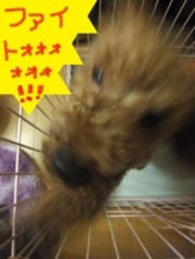 ならゆりあ 公式ブログ/みんな〜〜〜〜〜〜〜〜(`・∀・´) 画像1