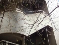 ならゆりあ 公式ブログ/春♪(#^.^#) 画像1