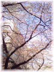 中山孟 公式ブログ/4月1日の目標〜今日も綺麗な桜〜 画像2