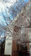 中山孟 公式ブログ/桜咲く 画像1