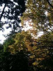中山孟 公式ブログ/紅葉を見に行こうよう(紅葉) 画像1