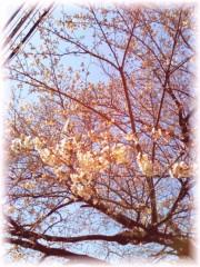 中山孟 公式ブログ/3月30日の目標〜桜の咲き始め〜 画像1