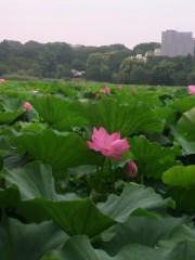 纐纈英里香 公式ブログ/蓮の花・・・ 画像3