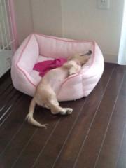 纐纈英里香 公式ブログ/寝像が面白いわんちゃん 画像2