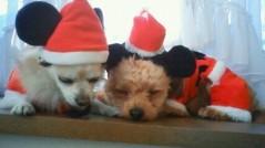 大神雄子 公式ブログ/Merry Christmas!!! 画像1