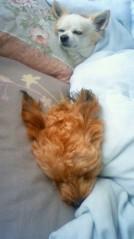 大神雄子 公式ブログ/愛犬PEACEとマイル 画像1