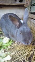 柏木優斗 プライベート画像 名前のないウサギ