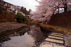荒井英夫 公式ブログ/桜満開 画像2