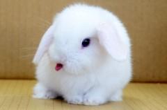 荒井英夫 公式ブログ/ホーランドロップのブールアイ 画像1