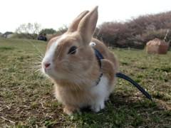 荒井英夫 公式ブログ/うさぎの散歩  画像1