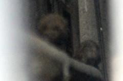 荒井英夫 公式ブログ/恐ろしきクマネズミ 画像2