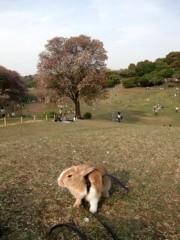 荒井英夫 公式ブログ/うさぎの散歩  画像2