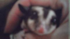 エスパー伊東 公式ブログ/かわいい動物 画像1