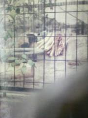 エスパー伊東 公式ブログ/パンダの写真 画像1