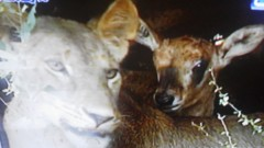 エスパー伊東 公式ブログ/動物同士の絆 画像1