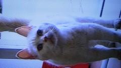 エスパー伊東 公式ブログ/猫の霊力 画像1