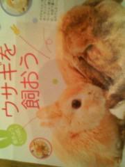 エスパー伊東 公式ブログ/カップ・アニマル 画像1