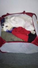 エスパー伊東 公式ブログ/軟体犬 画像1