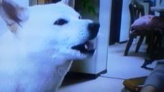 エスパー伊東 公式ブログ/激かわ・犬 画像1
